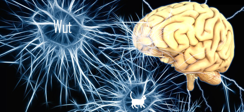 gedankenkeime-brain
